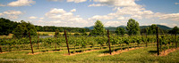 Afton Vineyard
